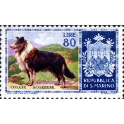 Cani di razza